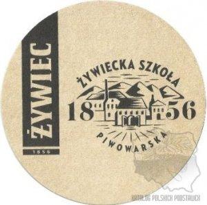 zywbz-244a